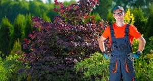 Grounds Manager Staffing, Robert Hanselman Domestic Agency